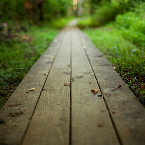 wooden_path_2-wallpaper-1920x1080