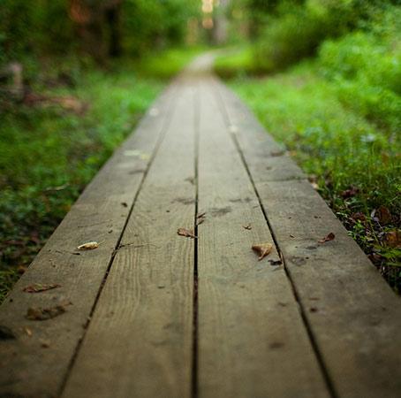 wooden_path_2-wallpaper-1920x1080